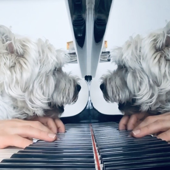 Der Teddy Eddy Song Terrier Lefa am Piano